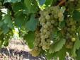 Wine circuit in Banat