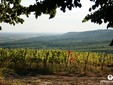 Drumul vinului sătmărean, Transilvania