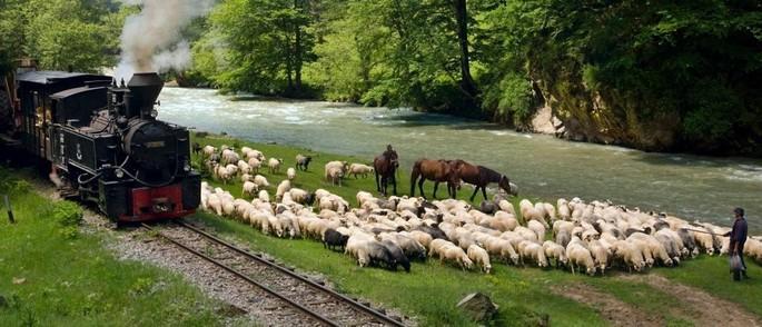 Mocănița - Valea Vaserului - Maramureș