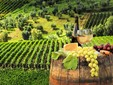 Târnave Vineyard, the road of the wine from Transylvania