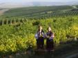 Cotnari vineyard