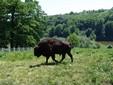 La terra dei bisonti - Moldavia