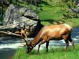 The Land of Bison - Moldavia