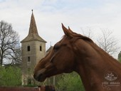 Equestrian tourism in Romania